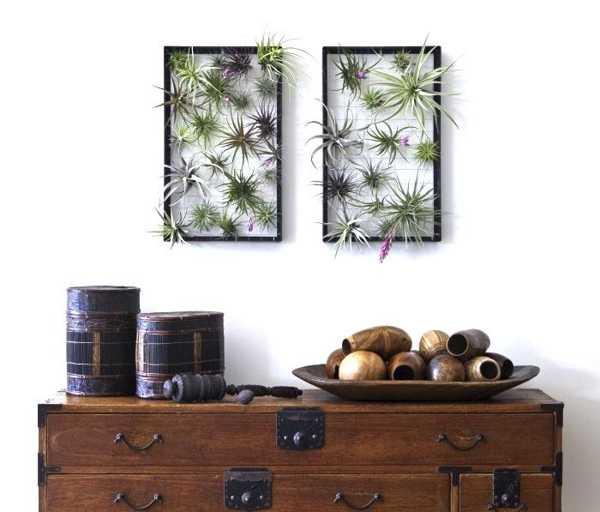 Wand Pflanzen in schwarzen Bildrahmen