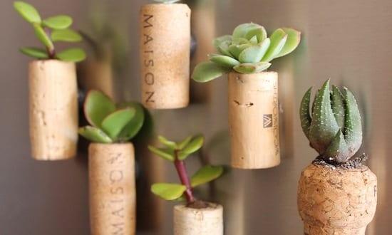 DIY Cork Planters – kreative Bastelideen mit Korken