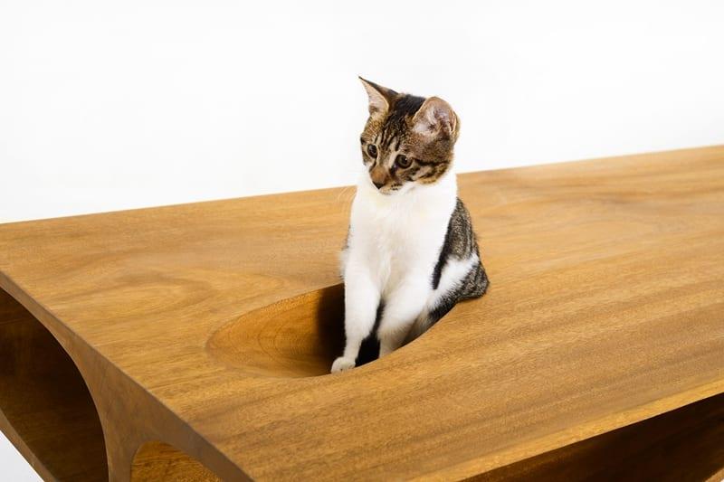 Paradies für die hauskatze - moderner Schreibtisch aus holz