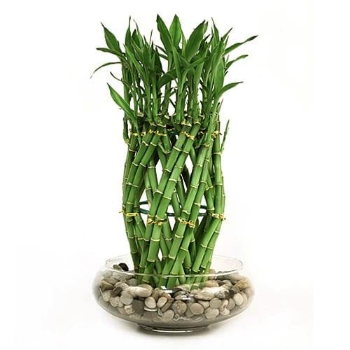 grüne deko idee mit bambuspflanze