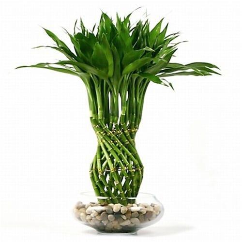 pflanzen deko idee in glas mit wasser und steinen