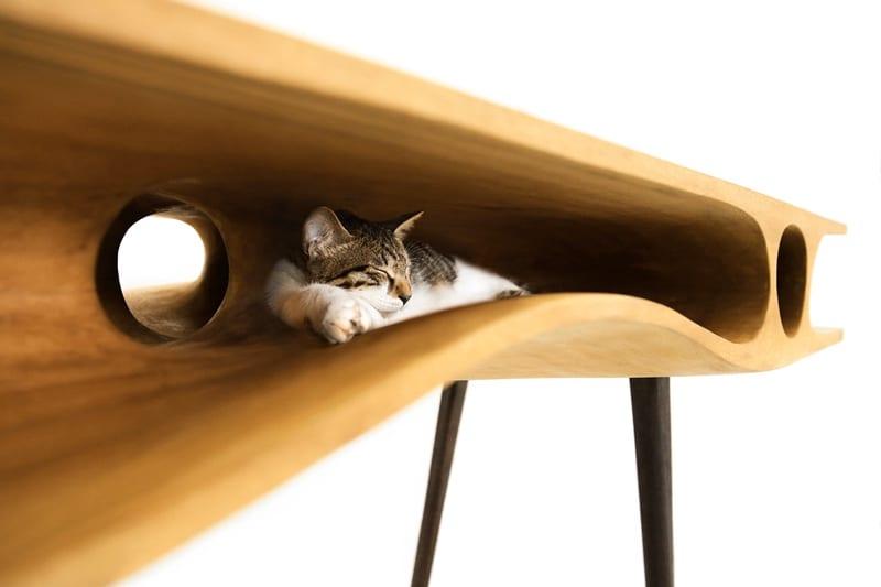 glückliche katzen - kreative Arbeitsfläche