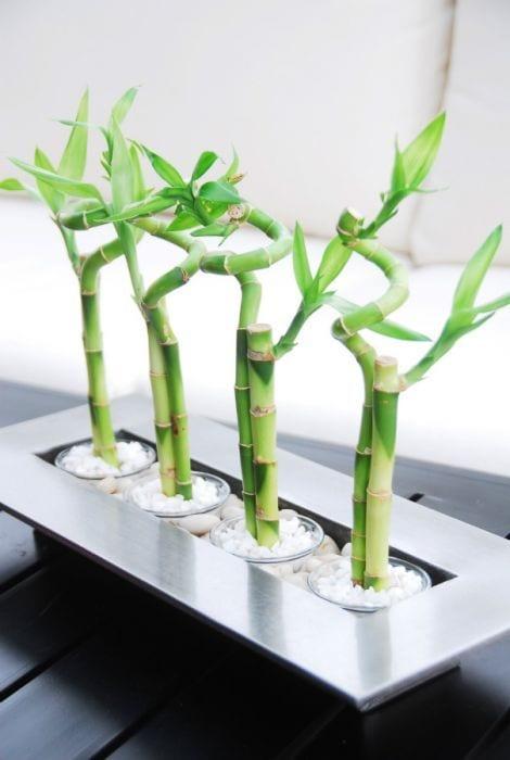deko idee mit glücksbambus in Glasbehältern mit weißen dekosteinen in Metall-Blumentopf