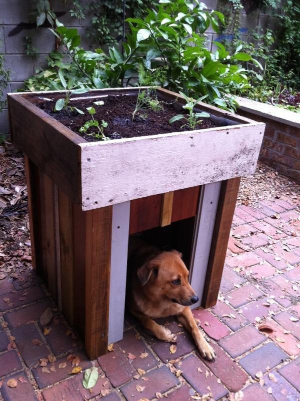 hundehütte mit flachdach alsdachgarten