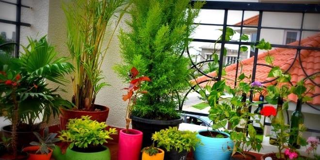 balkon ideen topfpflanzen freshouse. Black Bedroom Furniture Sets. Home Design Ideas
