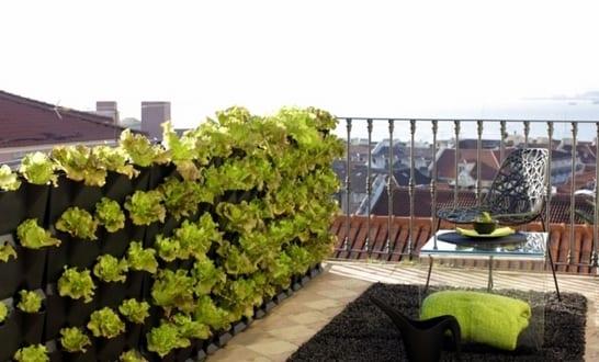 dachterrasse und balkon bepflanzen freshouse. Black Bedroom Furniture Sets. Home Design Ideas
