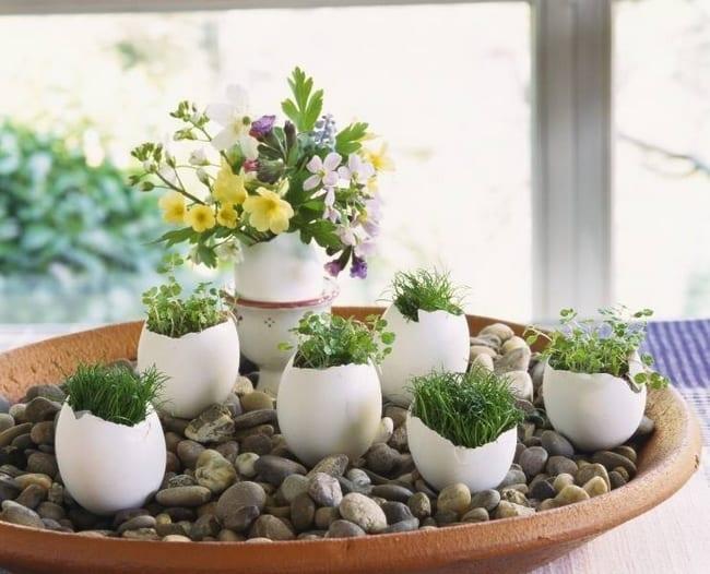 terrarrium dekorieren mit steinen und eierschalen