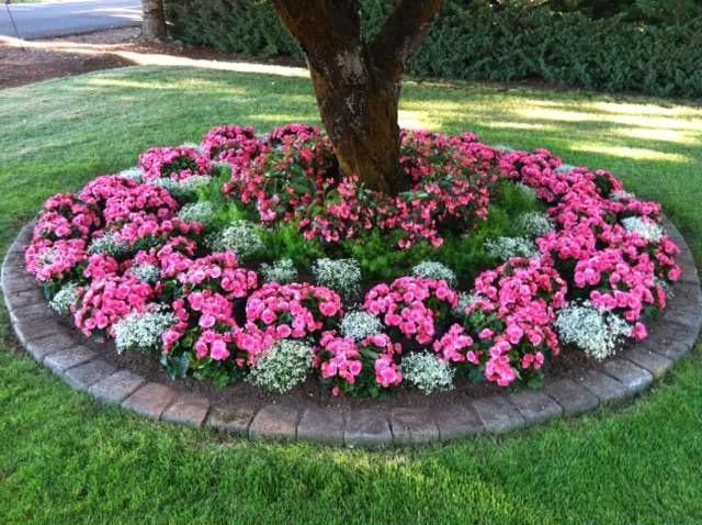 fantastische idee für DIY Gartenschau mit begonien