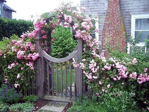 cottagegarten mit rosenboden aus hellrosa Rosen