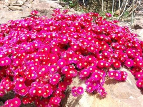 fantastische Gartenlanschaft in grellen farben