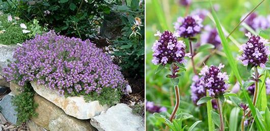 garten mit niedrig wachsenden lila blumen gestalten