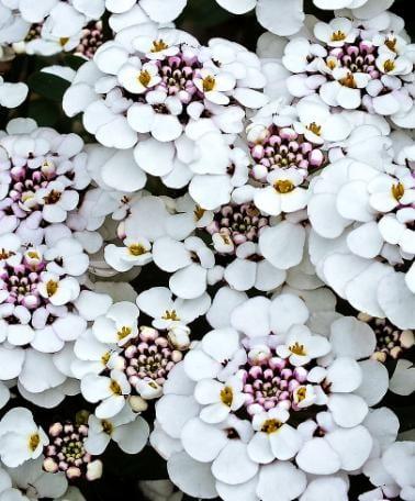 fantastische gestaltung für den garten mit weißen gartenblumen