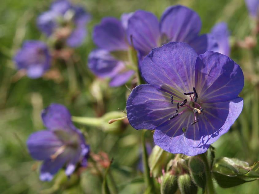 ideen für Blumengestaltung für den bauerngarten und für schöne gartenlandschaft