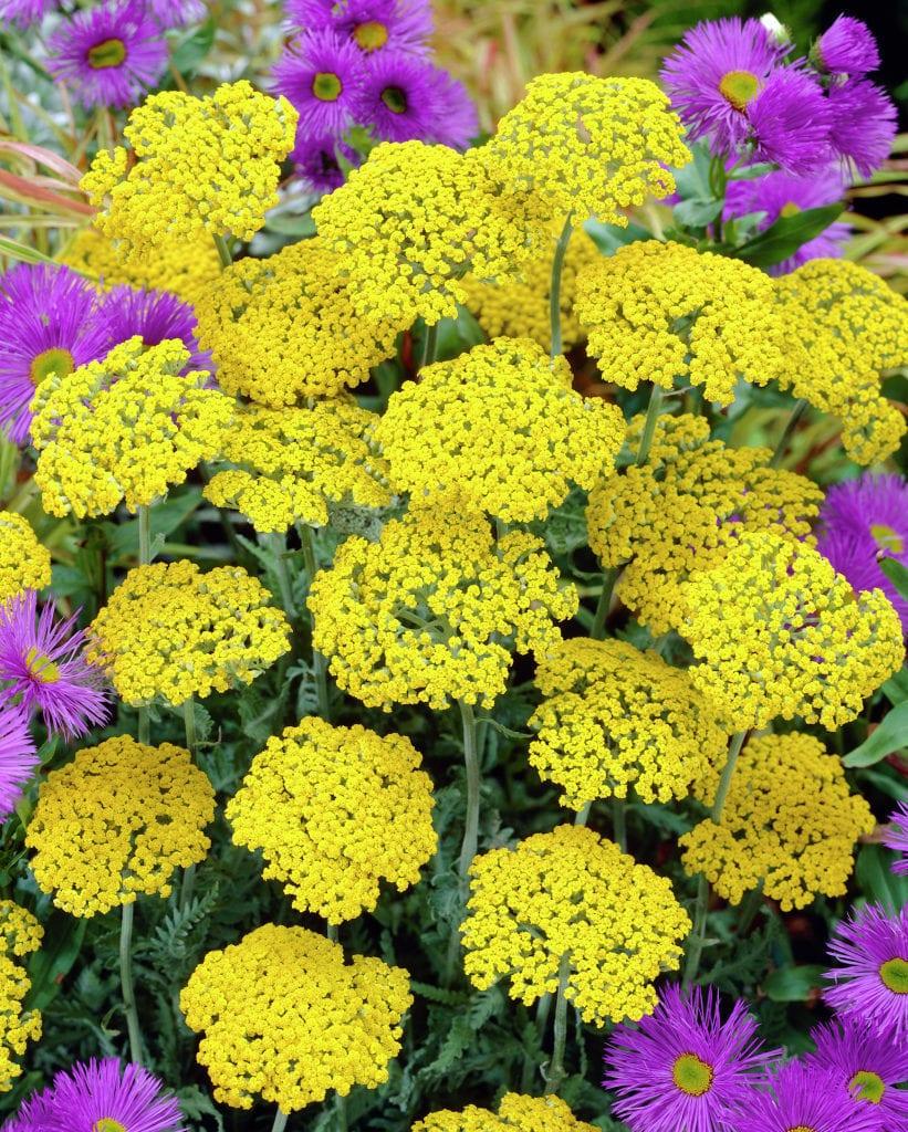 schöne gartenlandschaft in gelb und lila