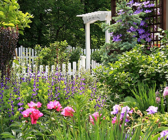 cottage garden mit Kletterblumen und gartenzaun weiß