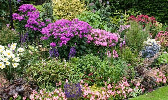 bauerngartenblumen für bunte gartengestaltung mit blumen
