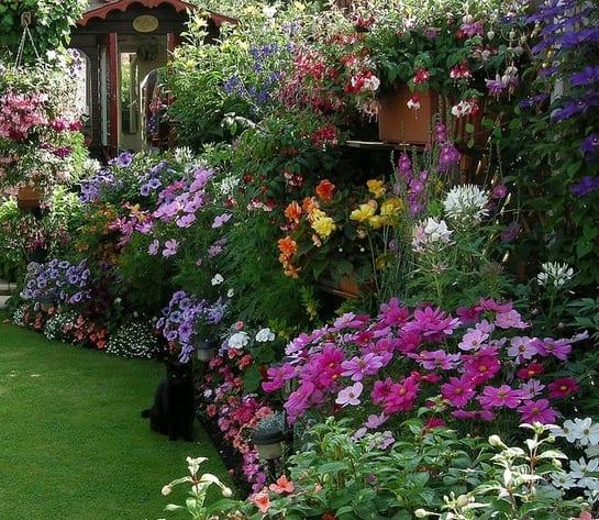bauerngarten anlegen mit wunderschöne gartenblumen