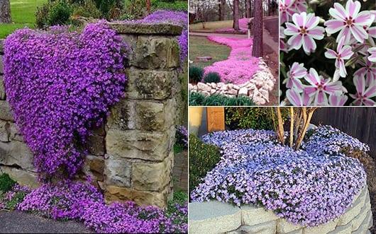 schöne gartenideen mit bodendecker in lila und pink