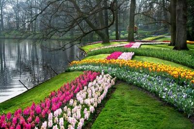 coole gartenschau ideen mit frühlingsblumen