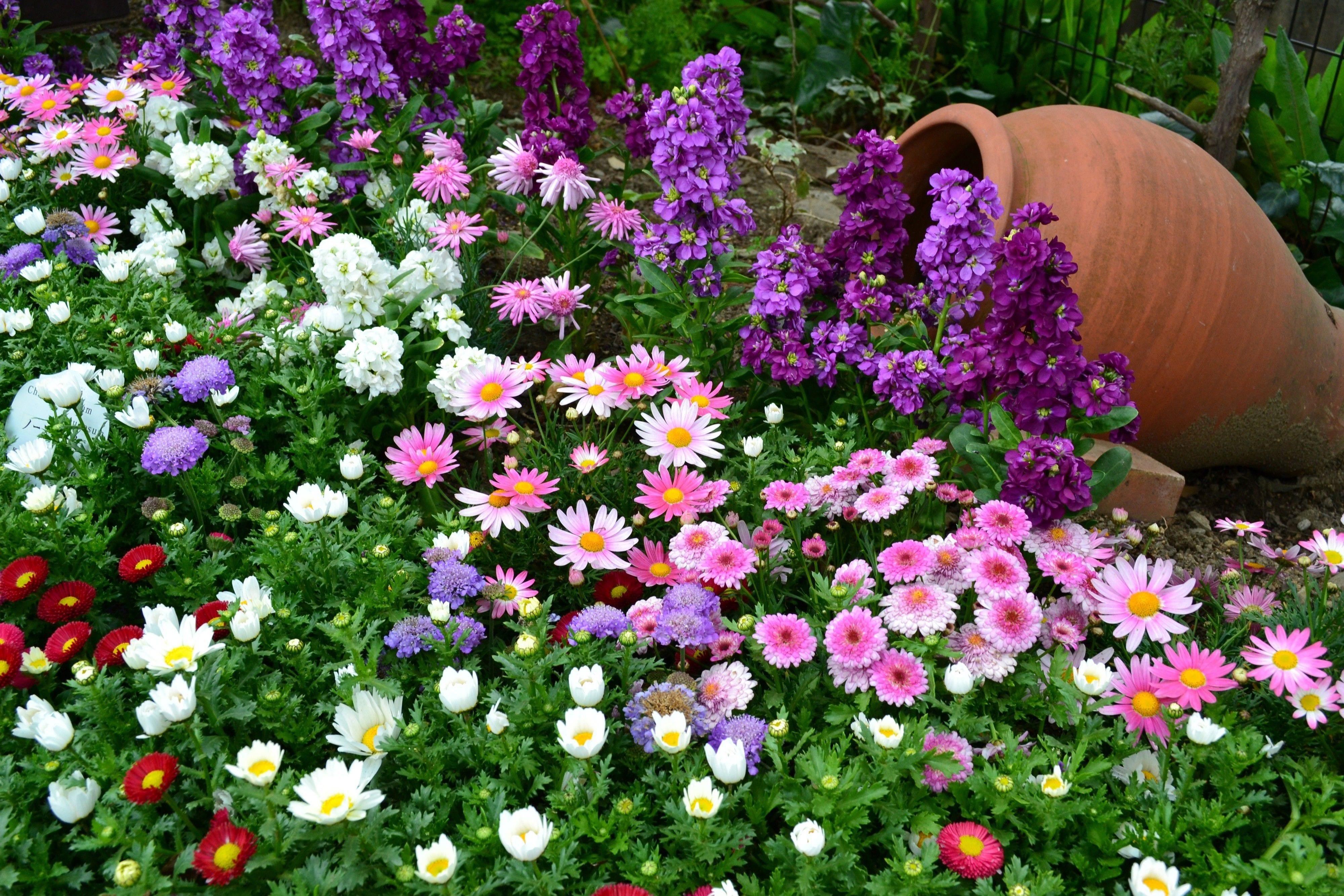 gartendeko mit Chrysanthemen