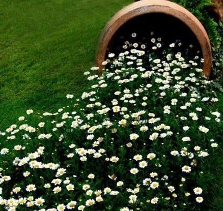 coole gartendeko idee mit weißen Wiesenwucherblumen
