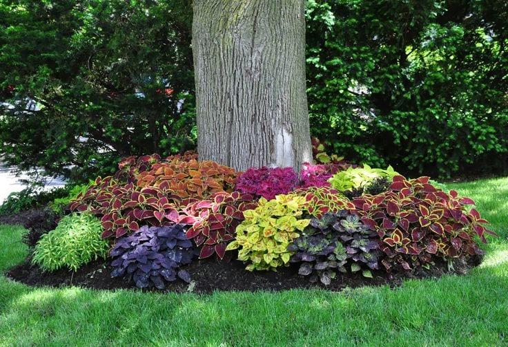Gartengestaltung mit coleus pflanzen freshouse for Gartengestaltung mit pflanzen
