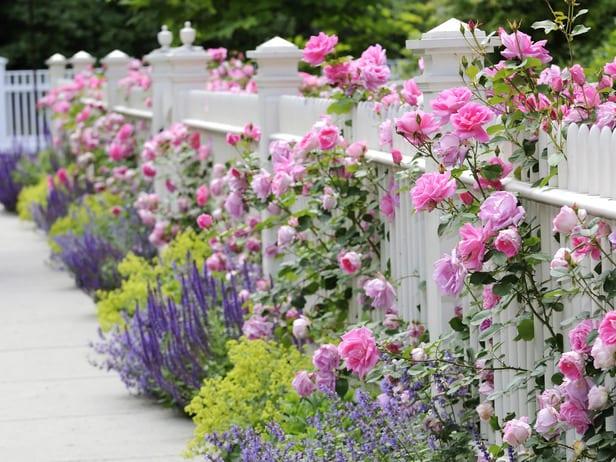 gartengestaltung mit Holzzaun weiß und rosen