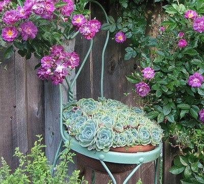 fantastische gartendeko idee mit metallstuhl als pflanzenbehälter
