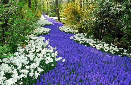 blunteppich von blauen und weißen blumen als beispiel für DIY Gartenschau