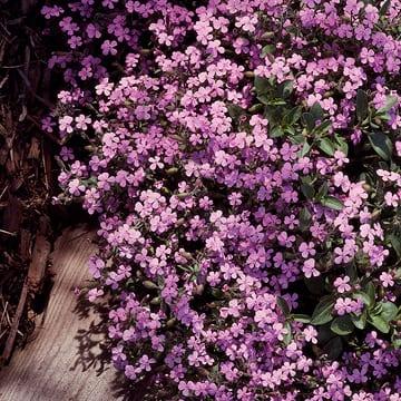 Bodendecker für fantastische Gartengestaltung - fresHouse