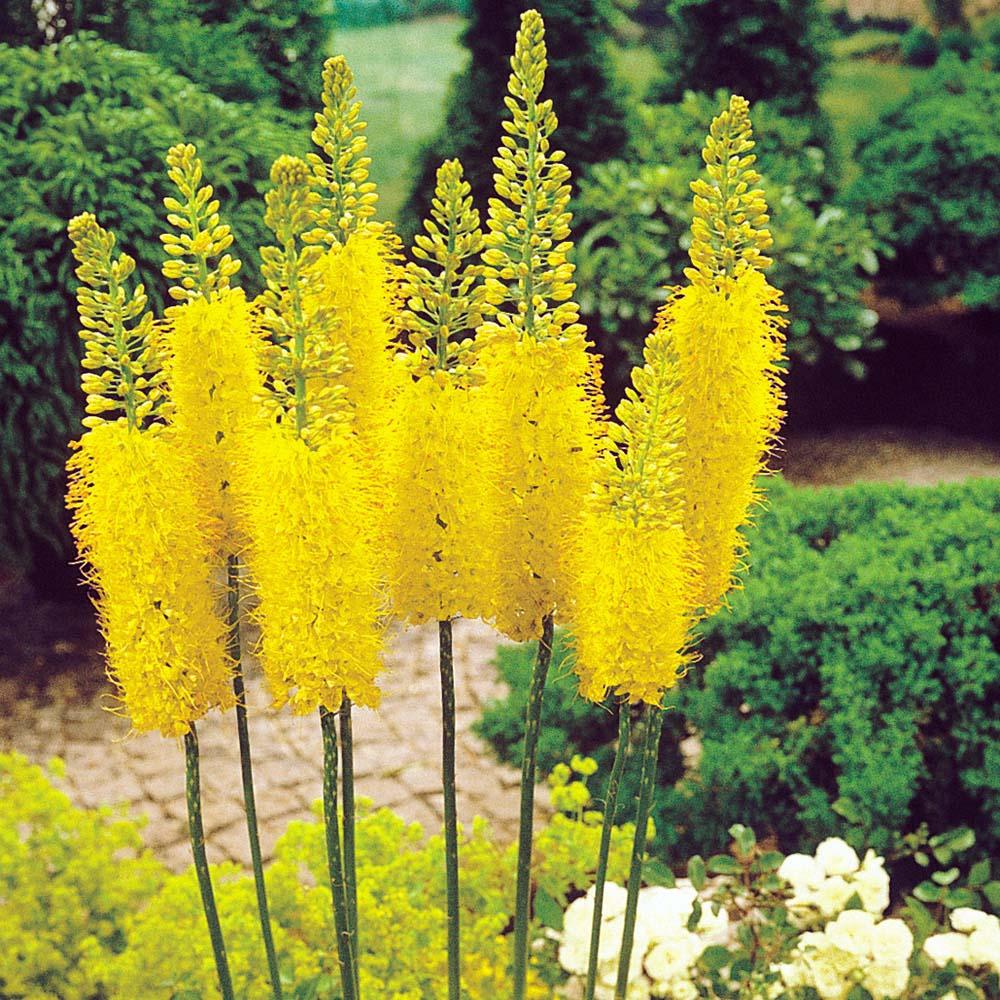 33 Blumensorten für den Bauerngarten fresHouse
