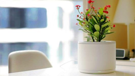 coole Deko Idee mit dem weißen Blumentopf Planty