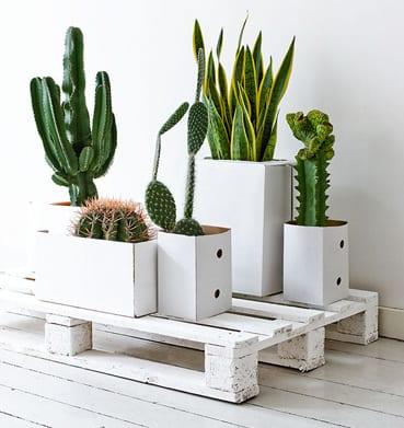 coole einrichtungs idee wohnzimmer rustikal mit europaletten und DIY Blumentöpfen aus kartons weiß