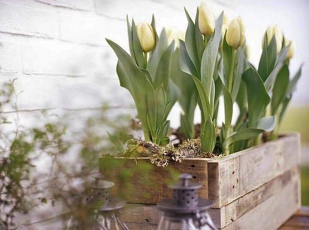 weiße tulpen für fantastische frühlingsdeko
