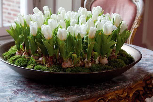 tischdeko mit tulpen weiß in runder schale