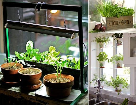 kräutergarten anlegen und pflegen_fantastische fensterdeko mit frischen grünen küchenkräutern