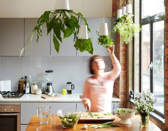kräutergarten in der küche als hängegarten von der decke