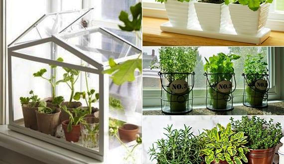 Kräutergarten Küche mein schöner kräutergarten anlegen in der küche freshouse