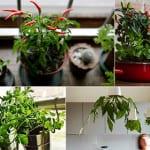 krätergarten alegen in der küche als coole fensterdeko und küchendeko idee mit frischen kraeutern