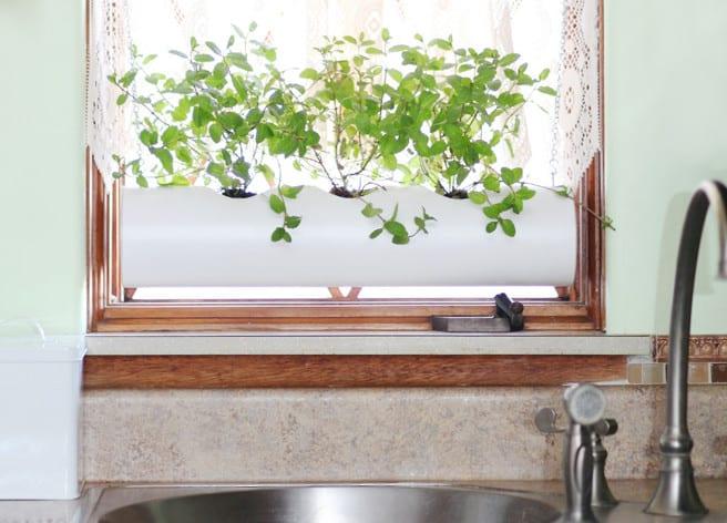 kräuter richt pflanzen_ideen für küchenkräuter fensterdeko