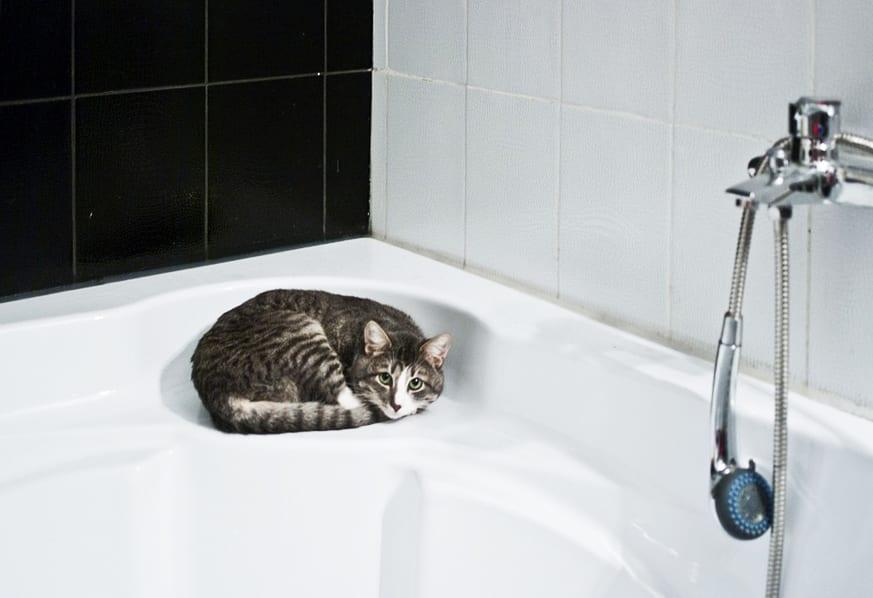 badgestaltung durch die kombination von schwarzen und weißen Fliesen