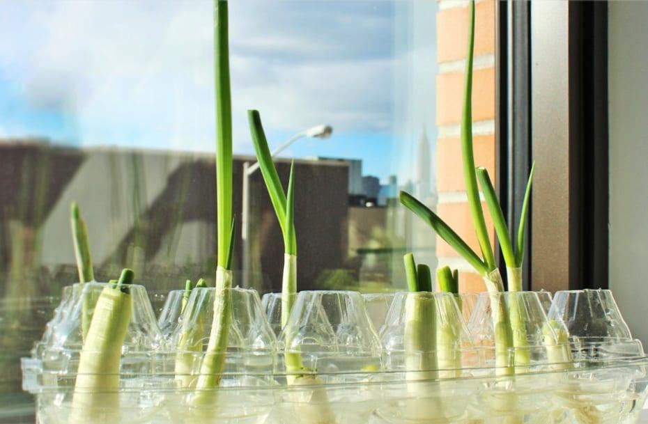 urban gardening ideas für gemüse-garten mit Frühlingszwiebel