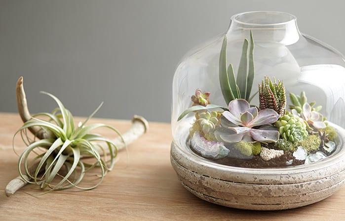 urban gardening ideas für terrarium als kleinen innengarten