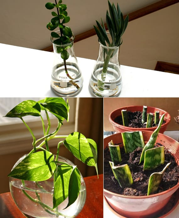 urban gardening ideas mit zimmerpflanzen
