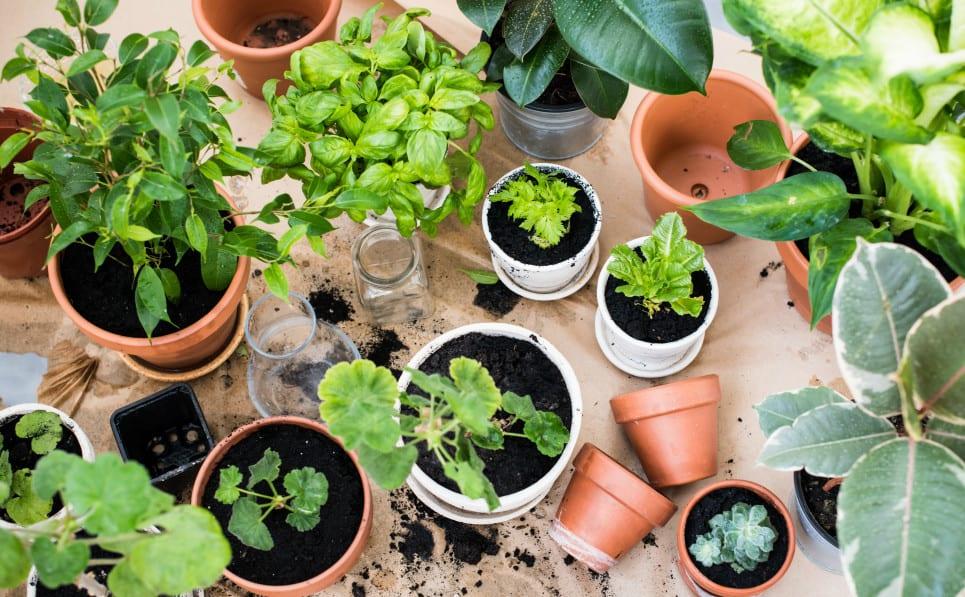 urban gardening ideas für city gardening