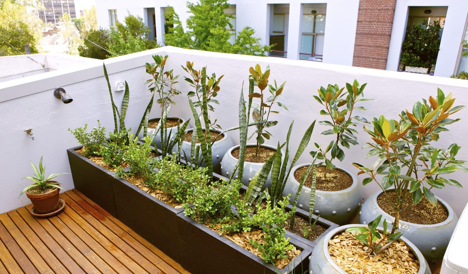 terrasse gestalten mit pflanzen-ihr eigener urban garden in der stadt