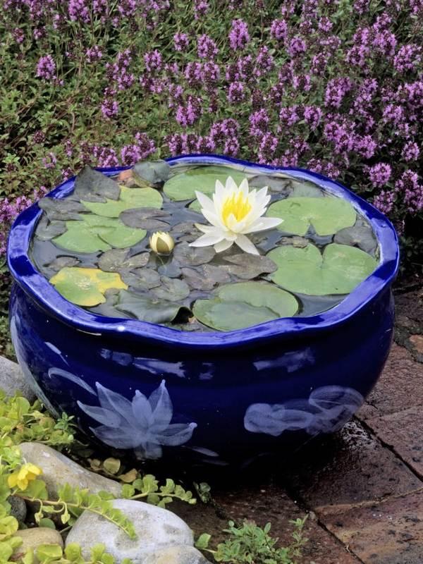 bastelnidee für diy garten-teich aus großem Blumentopf blau mit Wasserlilien