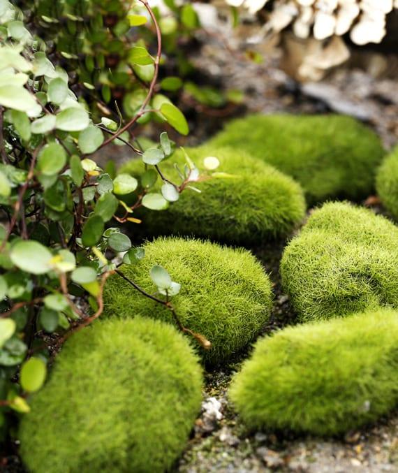 coole gartengestaltung mit grünen moos steinen