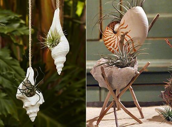 originelle idee für deko mit pflanzen und coole gartengestaltung mit meeresschnecken