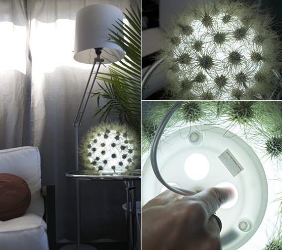 coole zimmerdeko idee mit kugel-Tischlampe aus Glas und Luftpflanzen